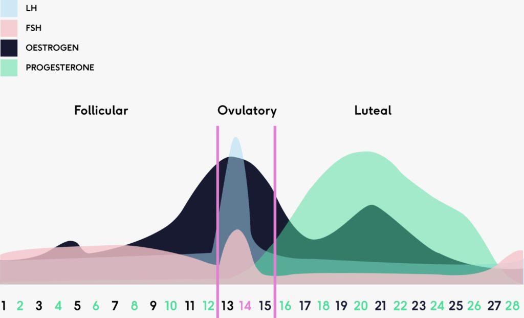 menstrual cycle the lowdown